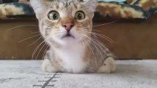 Korku Filmi İzleyen Kedi