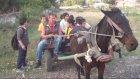 At Arabası Okul Servisi Oldu