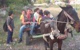 At Arabasının Okul Servisi Olması  Adana