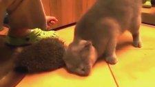 Kirpiden Akıllıca Faydalanan Kedi