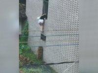 Pencereden Eve Girmeye Çalışan Kız