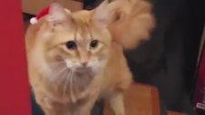 Sahipleri Tarafından Trollenen Sevimli Kedi