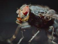 Böceklerle Yapılan Aşırı Sayko Klip