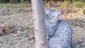 Eve Gitmemek İçin Ağacı Bırakmayan Kedi
