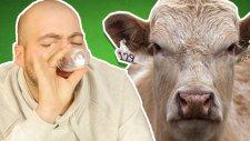 İlginç Sütleri Tattık - Yulaf Sütü, Badem Sütü