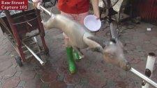 Keçiyi Kazığa Oturtup Pişirmek