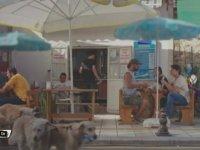 Bodrum Masalı - Sokak Köpekleri Mesajı