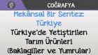 Mekânsal Bir Sentez: Türkiye - Türkiye'de Yetiştirilen Tarım Ürünleri (Baklagiller ve Yumrular)