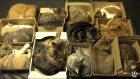 12 Kedi Videoları