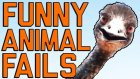 Funny Animal Fails: Just In Time For Election 2016 | Fail Army