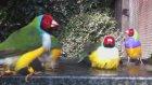 Kuşların Rengarenk Ve Cıvıl Cıvıl Bir Halleri