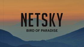 Netsky - Bird Of Paradise