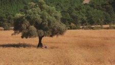 Aklan Akdağ - Zeytin Ağacı