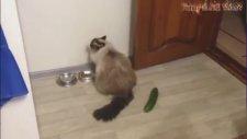 Gülmekten Kopartan Komik Kediler İzle