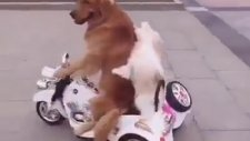 Aman Şoför Dikkat Et