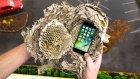 iPhone 7, Arı Kovanı İçerisinde Fırlatılırsa