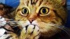 Happy Birthday Coco ! Cute Kittens And Funny Cats  Compilation - Kedi Videoları