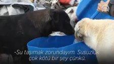 Türkiye'nin En Güzel Adamı