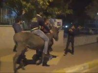 Fenerbahçe Galibiyetini Eşek Sırtında Kutlayan Taraftar