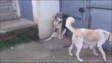 Anne Köpeğin Karşısında Esas Duruş Durmak