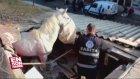 Balıkesir'de Balıkçının Çatısına At Düştü