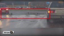 Trafik Kurallarına Harfiyen Uyan Ördek