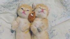 çok tatlı kedi yavruları
