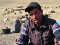 Koyunlara Cep Telefonundan Kaval Dinleten Çoban