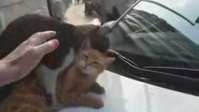 Sevişirken Arabadan Düşen Kediler