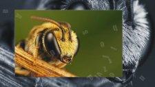 Arılar Hakkında Kısa Bilgiler