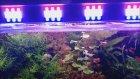 Bitkili Akvaryum Led Aydınlatma Yapımı