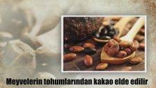 Dünyada İlkler İlk Kakao Üretimi