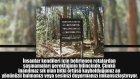 Japonya'nın İntihar Ormanı Aokigahara