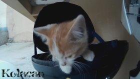 Yavru Kedinin Kurtuluşu ve Mutluluğu