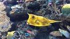 Akvaryum Gezisi: Aquarium Of The Pacific