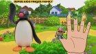 The Pingu Rant | Finger Family Songs | Nursery Rhyme | Kids Songs