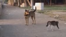 Brave Cat vs dogs one cat and five Dogs guess who wins YouTube