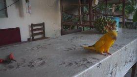 Çılgın Papağan