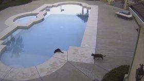 Kedi Su İçen Arkadaşını Gafil Avladı