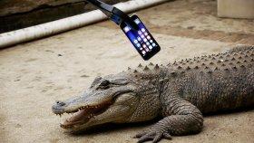 Timsah İphone 7'yi Isırırsa Ne Olur?