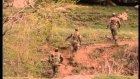 Ertugrul Polat-Asker Anasi