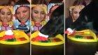 Pastayı Surata Yapıştırma Oyununu Troll'leyen Köpek