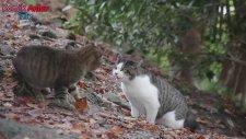 Kedi Kavgaları