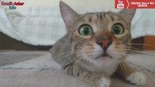 Sevimli Eğlenceli Kediler