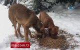 Karlı Havada Maltepe'de Mama Verilen Köpeklerin Mutluluğu
