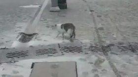 İlk Defa Kar Gören Masum İzmir Kedisi