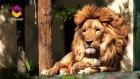 Kainatın Dilinden 17.Bölüm (Bir Varlık Bin Şahit)- Trt Diyanet