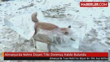 Almanya'da Nehre Düşen Tilki Donmuş Halde Bulundu