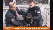 Fethi Sekin'in Köpeğine Mesai Arkadaşları Sahip Çıktı