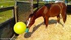 Çiftlik Atının Oyun Oynamaya Tepkisini Ölçmek